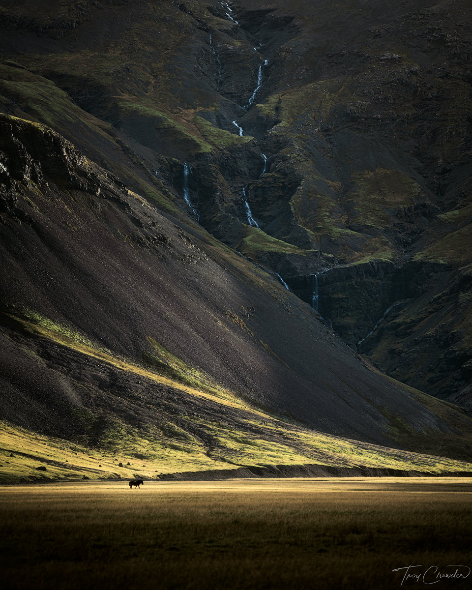 lone horse, iceland, eastern iceland, valley, photo