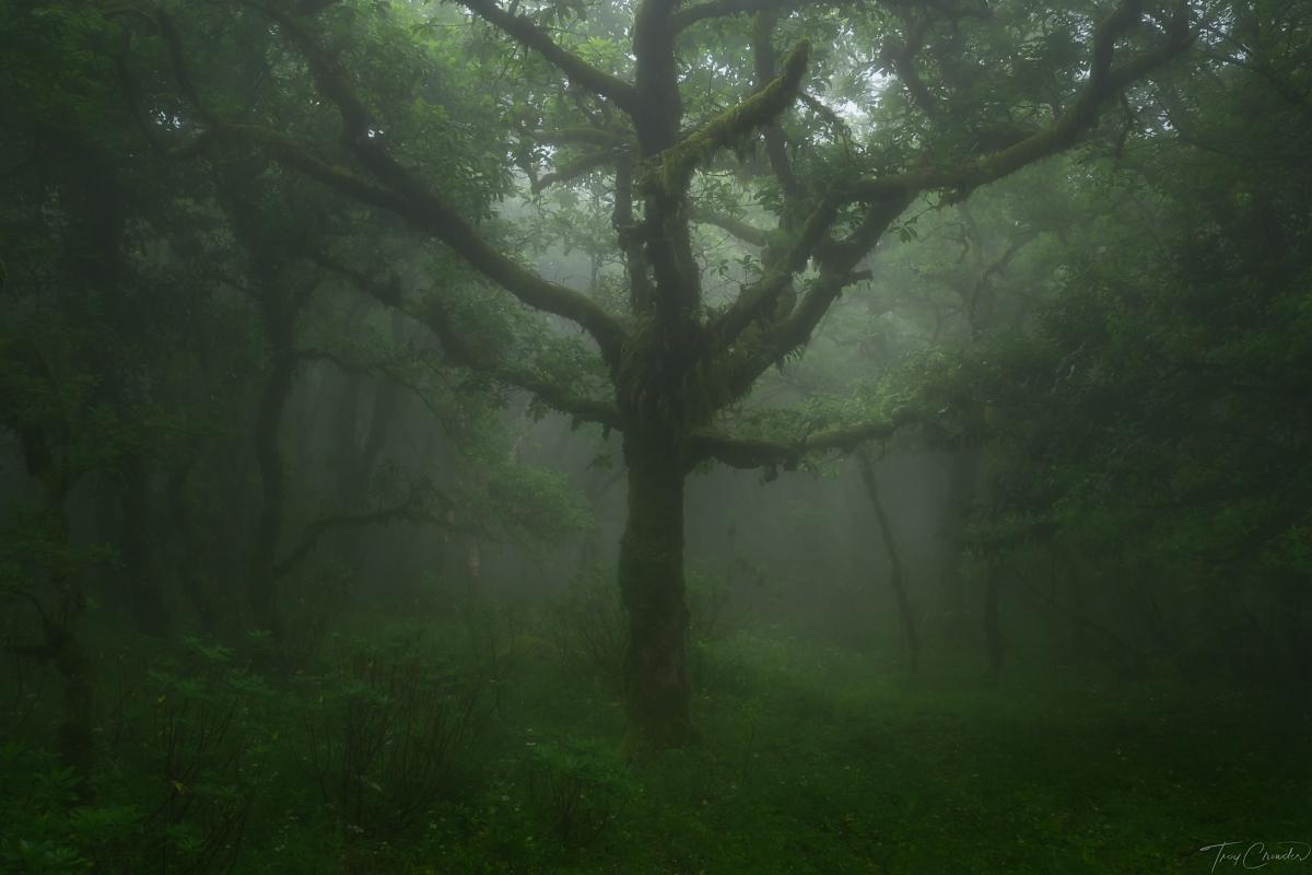 Oak tree in a tropical rainforest in Cadiz, Spain.